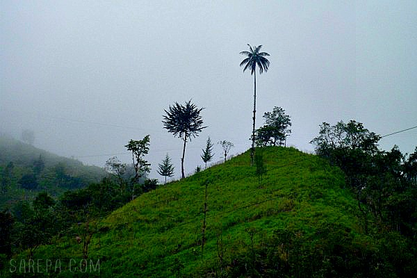 Ruta-Mutis-Travel-Colombia-5-sarepa