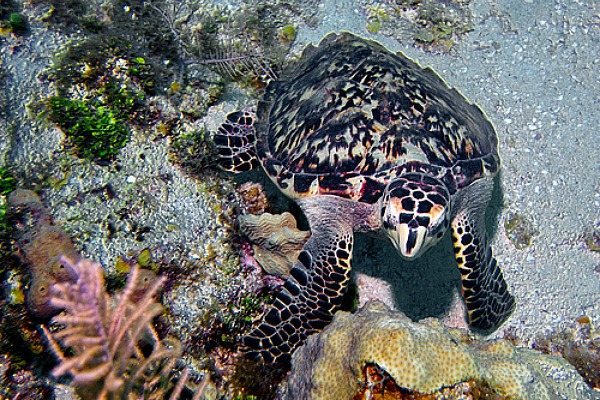 turtle-diving-colombia-travel